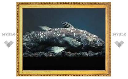 На Занзибаре пойман целакант