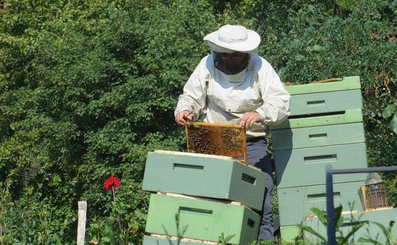 В сентябре тульские пчеловоды получат компенсации за массовую гибель пчёл