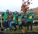 В музее-заповеднике «Куликово поле» высадили 6 тысяч деревьев