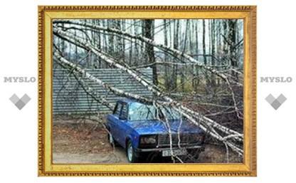 В Туле вырубают деревья
