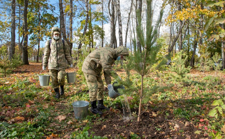 На общеобластном субботнике высадят более 200 деревьев