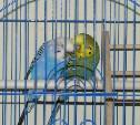 Кража в Щекино: у женщины похитили клетку с попугаями