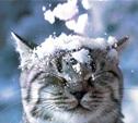 В России отмечают Всемирный день снега