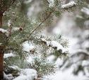 Погода в Туле 16 января: скользко, ветрено и холодно