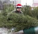 С 20 декабря в Туле заработают ёлочные базары