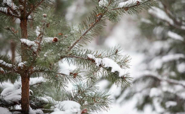 Погода в Туле 19 февраля: морозно и без осадков