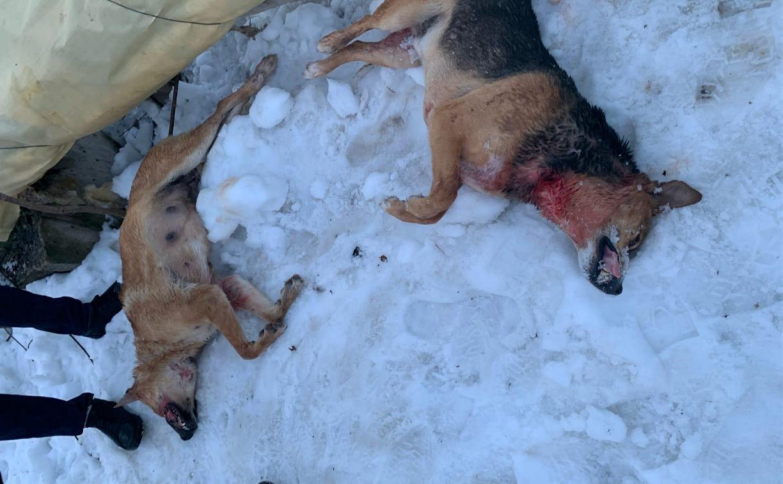 Зарезали и раздавили: в Новомосковске неизвестные жестоко убили бездомных собак