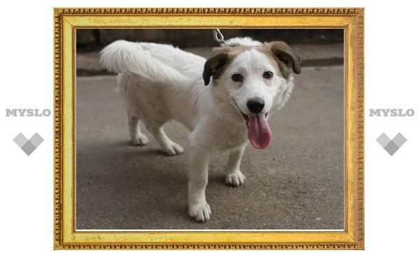 В Туле щенок ищет хозяев