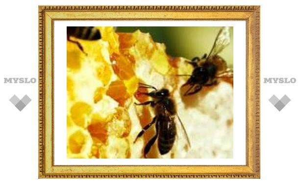 Тулу ожидает нашествие пчел