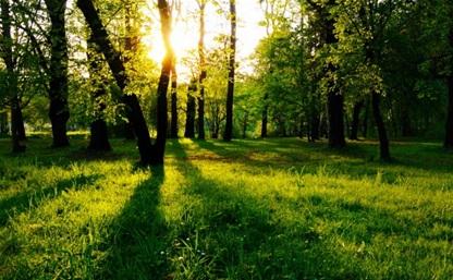 В Тульской области создадут национальный парк «Тульские засеки»