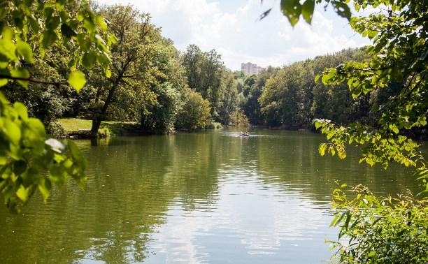 Платоновский лес. Что происходит в нём сейчас