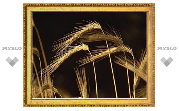 России посоветовали ввести эмбарго на экспорт зерна