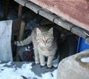 Туляков переселят из аварийных домов в новостройки