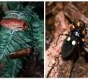 Клопы-хищнецы и тараканы «архимандриты» поселились в Тульском экзотариуме