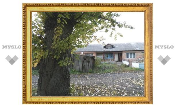 Жители Киреевска: «У властей нет денег на спиливание опасного дерева!»