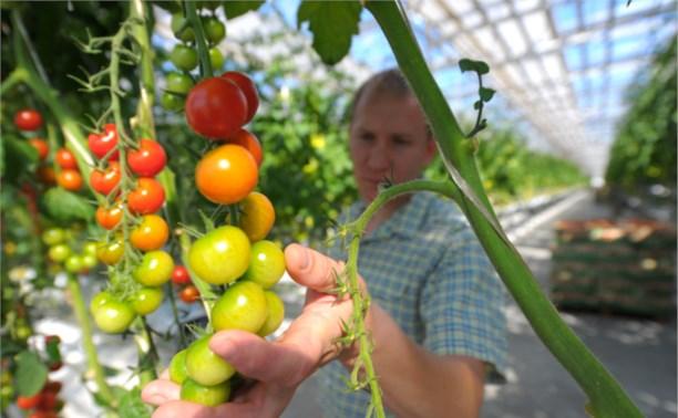 В России могут запретить торговлю продуктами с ГМО