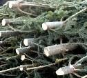 В Суворовском районе предприниматель-депутат незаконно спилил шесть деревьев