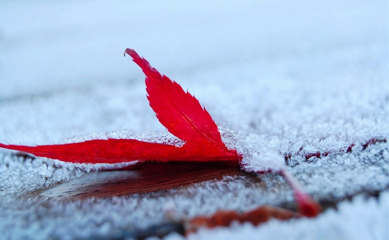 Погода в Туле 23 ноября: ветрено, морозно и без осадков