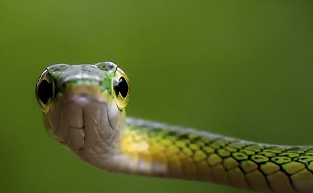 Тульский экзотариум отметит Международный день змей