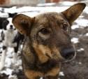 Проблемой бездомных животных в Туле займётся благотворительный фонд «Ника»