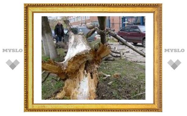 Упавшее дерево едва не придавило машины туляков