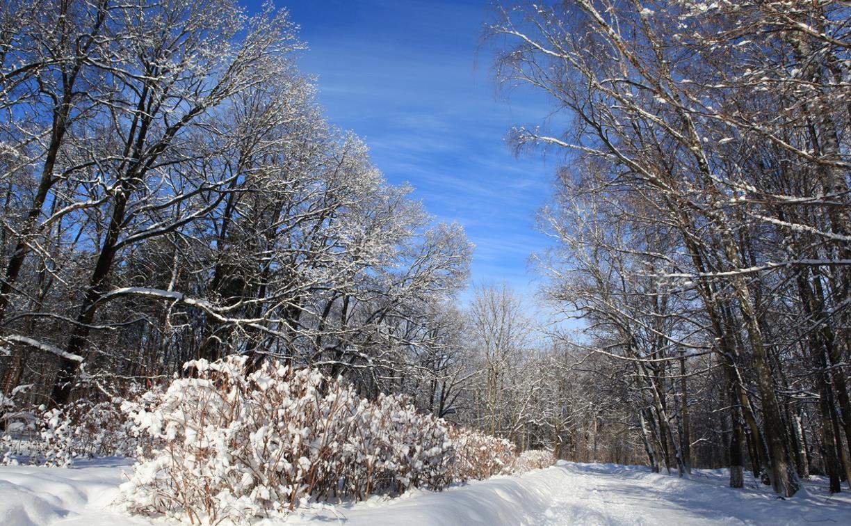 В Тулу придут почти 30-градусные морозы