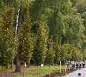 В Тульской области высажено более 1 600 молодых деревьев