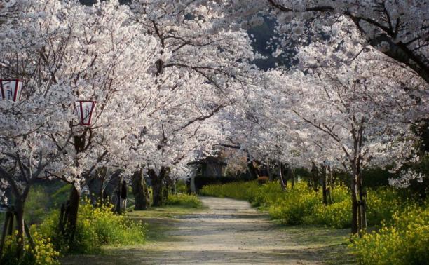 В Заречье могут разбить вишнёвый сад