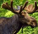 В Ясногорском районе задержан подозреваемый в браконьерстве