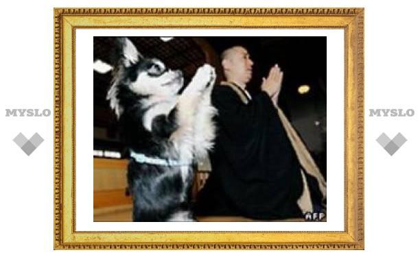 """В буддийском храме Японии собаку научили """"молиться"""""""