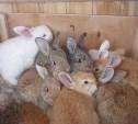 Полиция Киреевска задержала похитителя кроликов