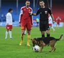 """""""Арсенал"""" оштрафуют за собаку на поле"""