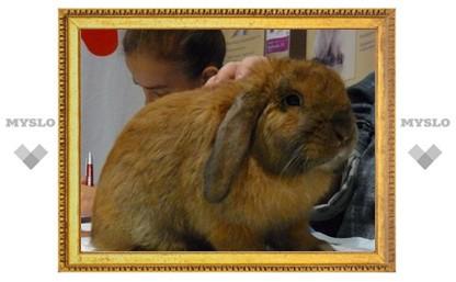 В Туле пройдет выставка кроликов