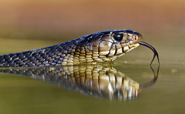 В Тульской области во время купания в р. Красивая Меча мужчину укусила змея