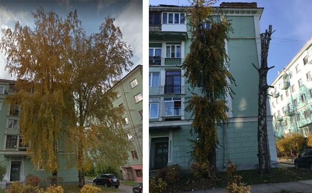 Жительница Новомосковска пожаловалась на варварское кронирование деревьев