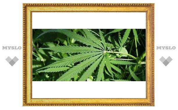 Под Тулой обнаружен склад марихуаны
