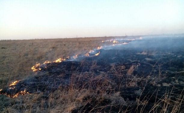 На минувших выходных тульские пожарные более 400 раз выезжали на тушение травы