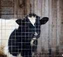 Правительство РФ планирует ограничить поголовье скота в личных подсобных хозяйствах
