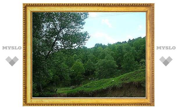 В Тульской области вырастят дагестанскую березу