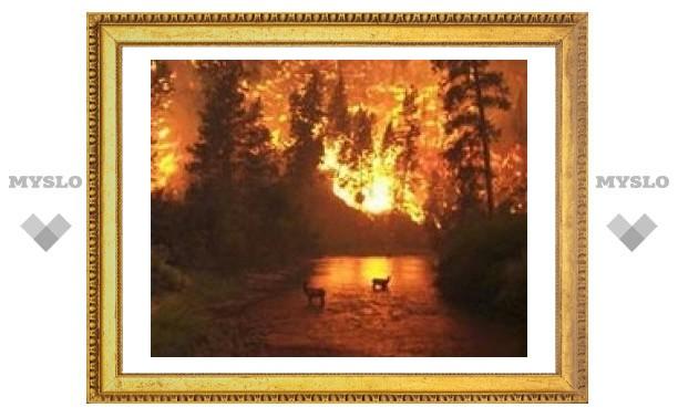 Тульские спасатели тушат лесные пожары