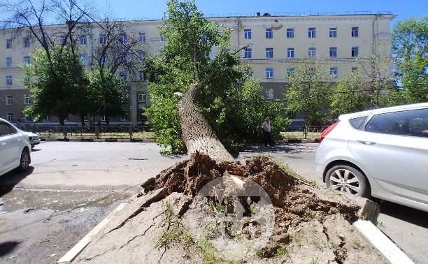 В Туле улица Болдина полностью перекрыта упавшим 20-метровым тополем