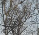 Администрация Тулы прокомментировала удаление аварийных деревьев на Красноармейском проспекте