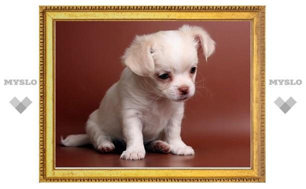 В Туле пройдет День щенка