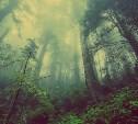 Памятка от полиции: Как не пропасть в тульских лесах