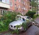 В Туле дерево упало на машину