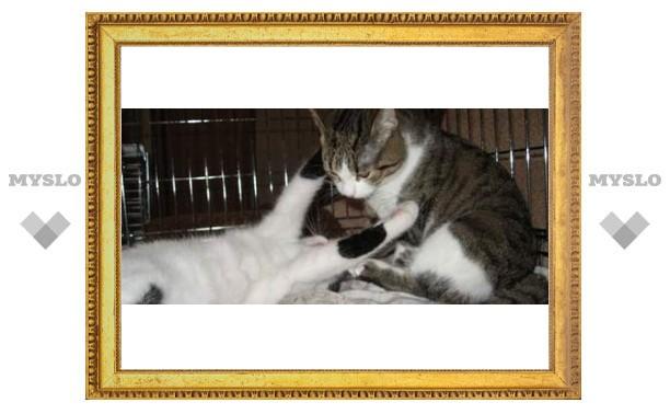 В Туле животные ищут хозяина