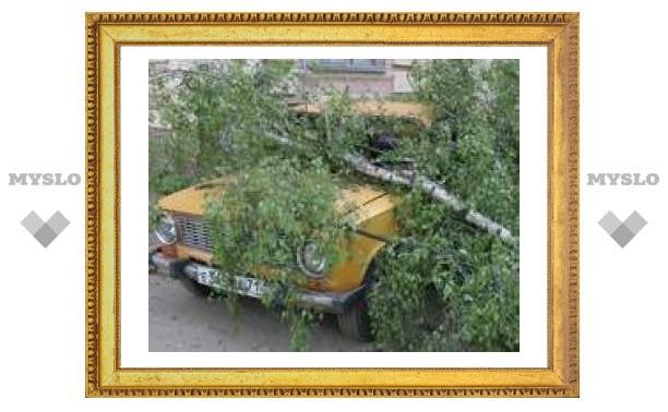 Туляков атакуют деревья