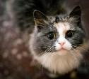 Владельцы домашних животных живут дольше