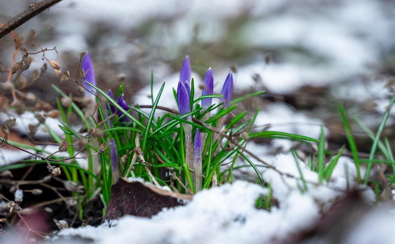 Какая погода ждет туляков 14 марта