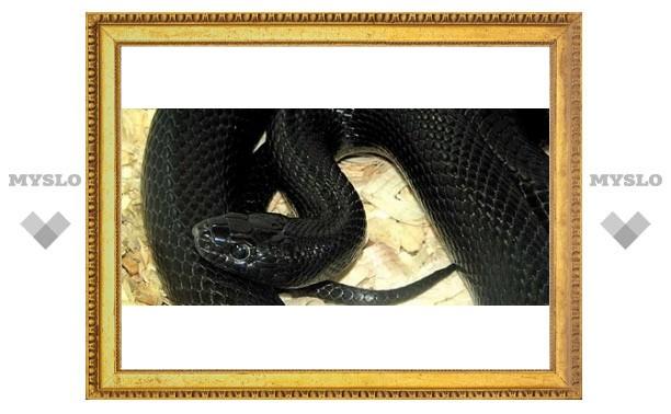 Змеи научат туляков любить